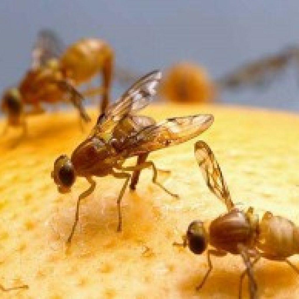 Flies 'n' Maggots - Caustic Soda