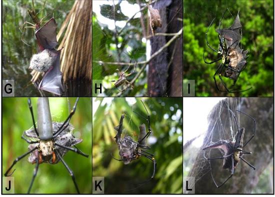 Web Building Spiders Caustic Soda